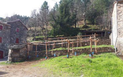 Les treilles, anciennes vignes des mineurs, patrimoine de la commune